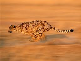 natural sprinting